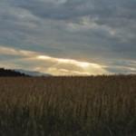 index_dinkel_sunlight